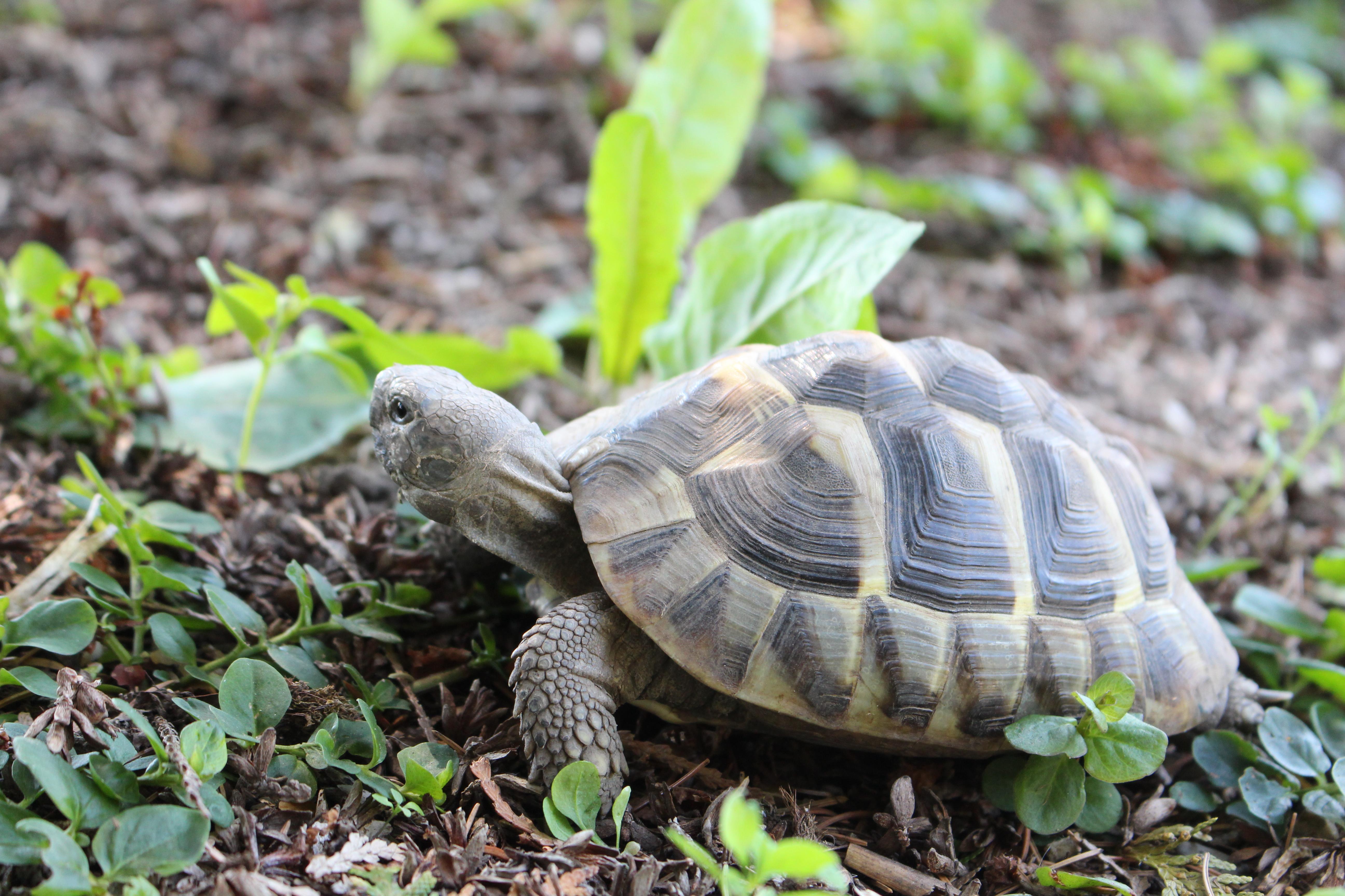 07) Schildkröten hören auf ihren Namen - Patty Sue - DIE Schildkröte